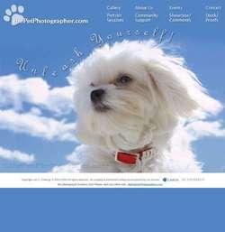 The Pet Photographer