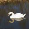 Ugly Duckling or Beautiful Swan